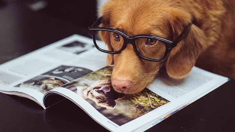 brain training for dogs affiliate program - dog wearing glasses